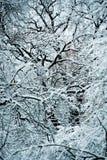 Bosque nevado de las plantas de los árboles en filtro del invierno Imagen de archivo libre de regalías