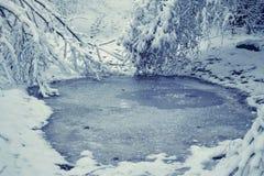 Bosque nevado de las plantas de los árboles en filtro del invierno Fotos de archivo libres de regalías