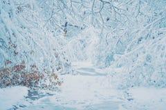 Bosque nevado de las plantas de los árboles en filtro del invierno Foto de archivo libre de regalías