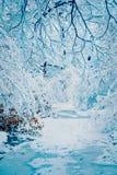 Bosque nevado de las plantas de los árboles en filtro del invierno Imágenes de archivo libres de regalías