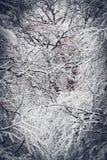 Bosque nevado de las plantas de los árboles en invierno Fotografía de archivo