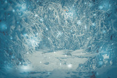 Bosque nevado de las plantas de los árboles en invierno Imagen de archivo libre de regalías