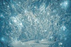 Bosque nevado de las plantas de los árboles en invierno Imagen de archivo