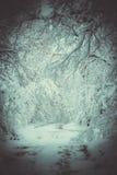 Bosque nevado de las plantas de los árboles en invierno Foto de archivo libre de regalías