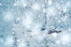 Bosque nevado de las plantas de los árboles en invierno Imágenes de archivo libres de regalías