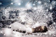 Bosque nevado de las plantas de los árboles en invierno Fotos de archivo