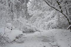Bosque nevado de las plantas de los árboles en invierno Fotografía de archivo libre de regalías