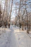 Bosque nevado del abedul del invierno Foto de archivo libre de regalías