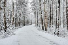Bosque nevado del invierno Foto de archivo