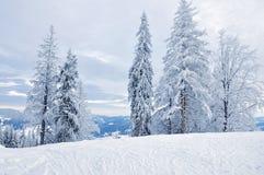 Bosque nevado del invierno Fotografía de archivo