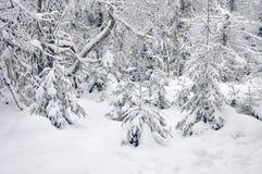 Bosque nevado del invierno Imagen de archivo libre de regalías
