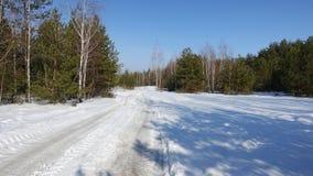 Bosque nevado del invierno en tiempo soleado Fotos de archivo libres de regalías