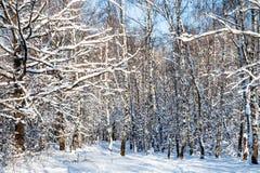 bosque nevado en bosque en día de invierno soleado Fotografía de archivo libre de regalías