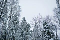 Bosque Nevado en el fondo del cielo Imágenes de archivo libres de regalías