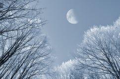Bosque Nevado en invierno Fotografía de archivo