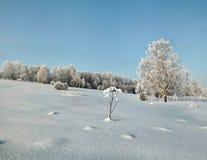 Bosque Nevado en la cuesta del invierno con el cielo claro Foto de archivo