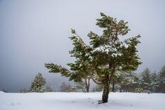 Bosque Nevado en las montañas de Madrid. Imagen de archivo libre de regalías