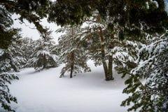 Bosque Nevado en las montañas de Madrid. Foto de archivo libre de regalías