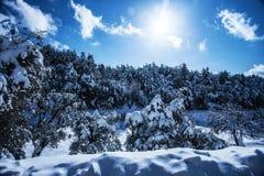 Bosque Nevado en montañas Fotografía de archivo libre de regalías