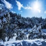 Bosque Nevado en montañas Imagen de archivo libre de regalías