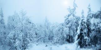 Bosque nevado fabuloso Foto de archivo libre de regalías