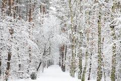 Bosque nevado - impresión del invierno Fotos de archivo libres de regalías