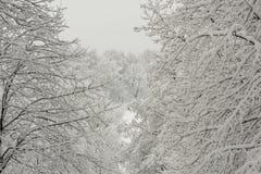 Bosque nevado mucha nieve imagenes de archivo