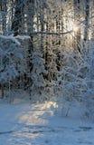 Bosque nevado, un día de invierno claro imagenes de archivo