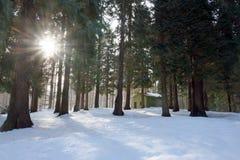 Bosque Nevado y sol estrellado imagenes de archivo