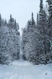 Bosque nevoso con un camino, Rusia, Ural del invierno foto de archivo