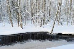 Bosque nevoso del abedul del invierno en la orilla del río en el amanecer Foto de archivo libre de regalías
