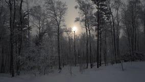 Bosque nevoso del invierno metrajes