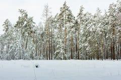 Bosque nevoso del invierno Fotos de archivo