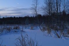 Bosque nevoso del invierno bajo luz de la luna Imágenes de archivo libres de regalías