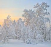 Bosque nevoso del invierno en la salida del sol Fotos de archivo