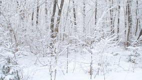 Bosque nevoso del invierno hermoso metrajes