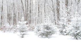 Bosque nevoso del invierno hermoso almacen de metraje de vídeo