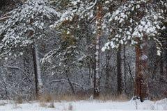 Bosque nevoso denso Imagenes de archivo