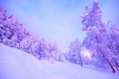 bosque nevoso, bosque encantado, paisaje emocional de la nieve del invierno, foto de archivo