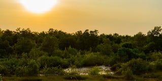 Bosque no por do sol imagens de stock