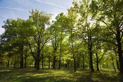 Bosque no verão imagens de stock royalty free