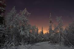 Bosque nocturno Foto de archivo libre de regalías