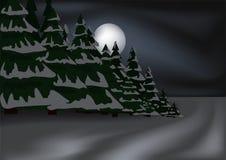Bosque nocturno del invierno Imagen de archivo