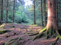 Bosque noruego Foto de archivo