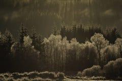 Bosque nublado Fotografía de archivo libre de regalías