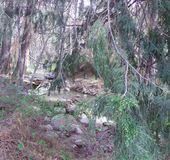 Bosque ocultado imagen de archivo libre de regalías