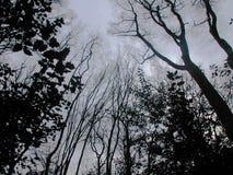 Bosque oscuro Imagen de archivo libre de regalías