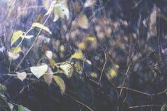 Bosque oscuro Foto de archivo libre de regalías