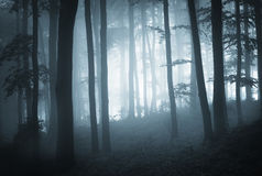 Bosque oscuro con las siluetas azules de la niebla y del árbol Imagen de archivo libre de regalías