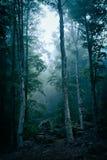 Bosque oscuro con niebla Imágenes de archivo libres de regalías